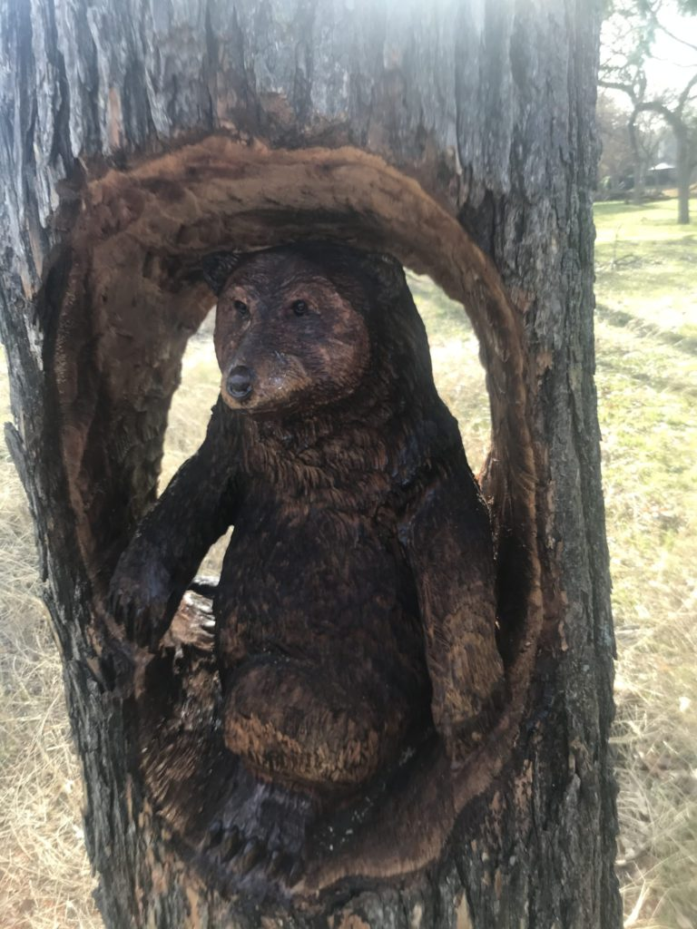 White Rock Creek Trail - Bear carved from storm damaged tree