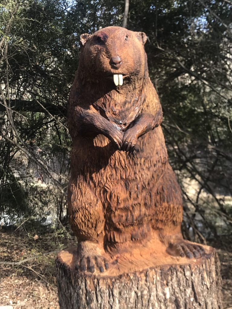 White Rock Creek Trail - Beaver carved from storm damaged tree