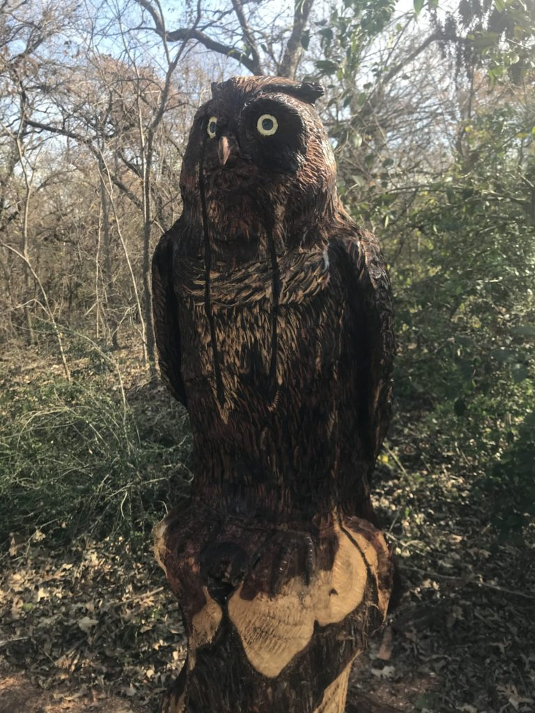 White Rock Creek Trail - Owl carved from storm damaged tree